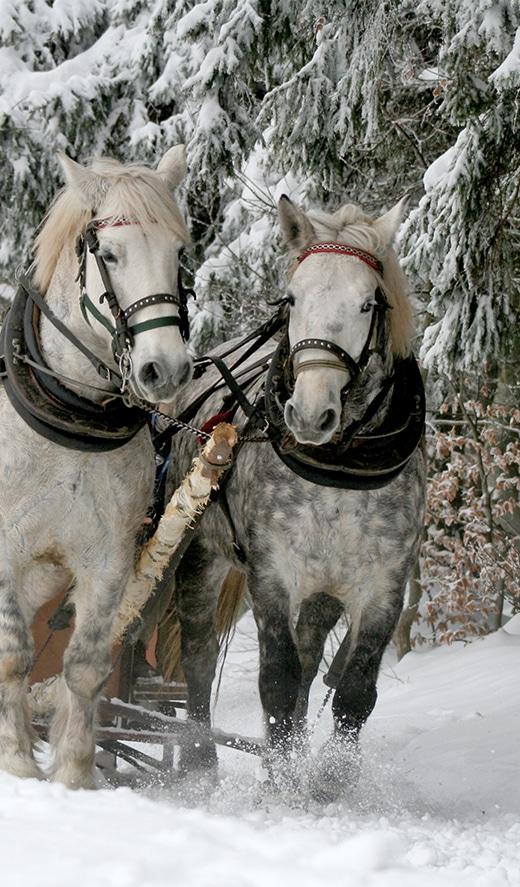 SL-activities-sleigh